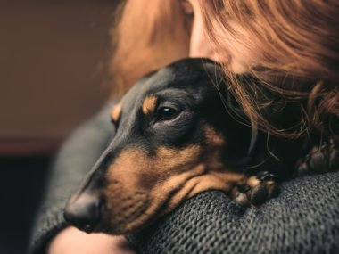 Friendly dachshund being cuddled by a woman