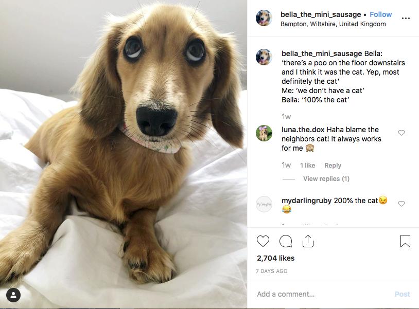 Instagram screenshot of @bella_the_mini_sausage