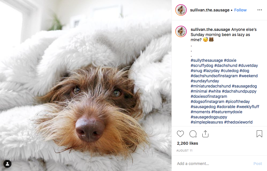 Instagram screenshot of @sullivan.the.sausage