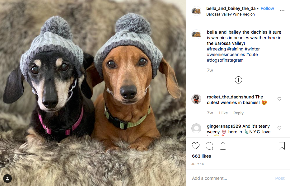 Instagram screenshot of @bella_and_bailey_the_dachies