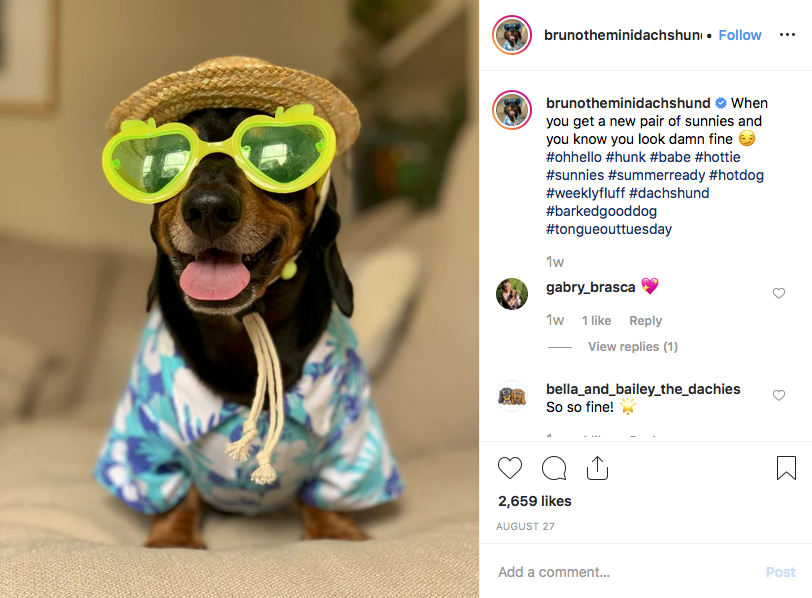 Instagram screenshot of dachshund @brunotheminidachshund
