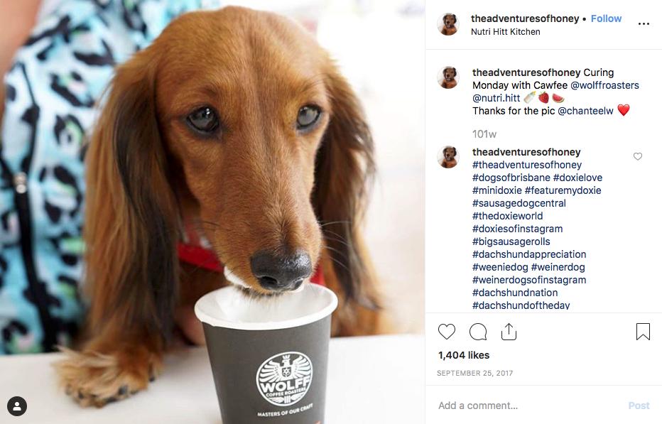 Instagram screenshot of dachshund @theadventuresofhoney