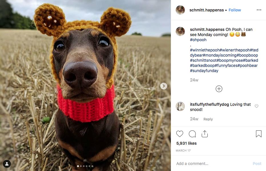 Instagram screenshot of dachshund @schmitt.happenss