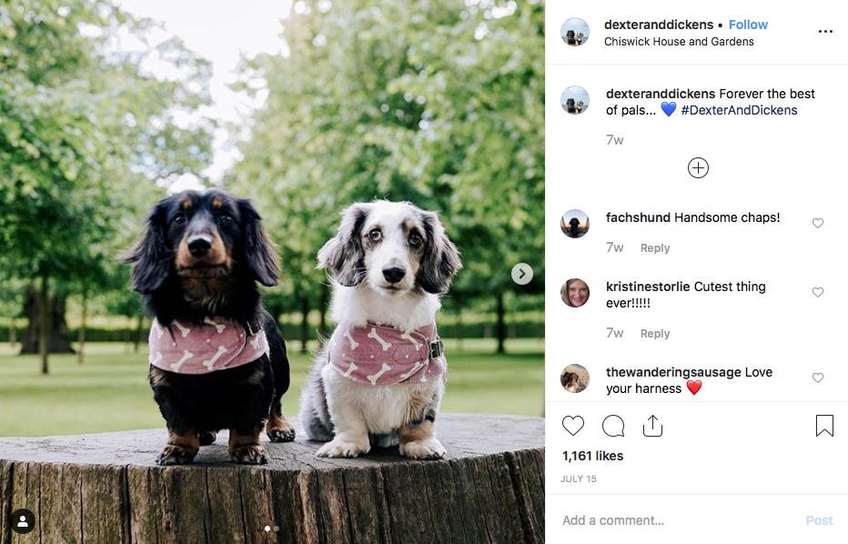 Instagram screenshot of dachshund @dexteranddickens