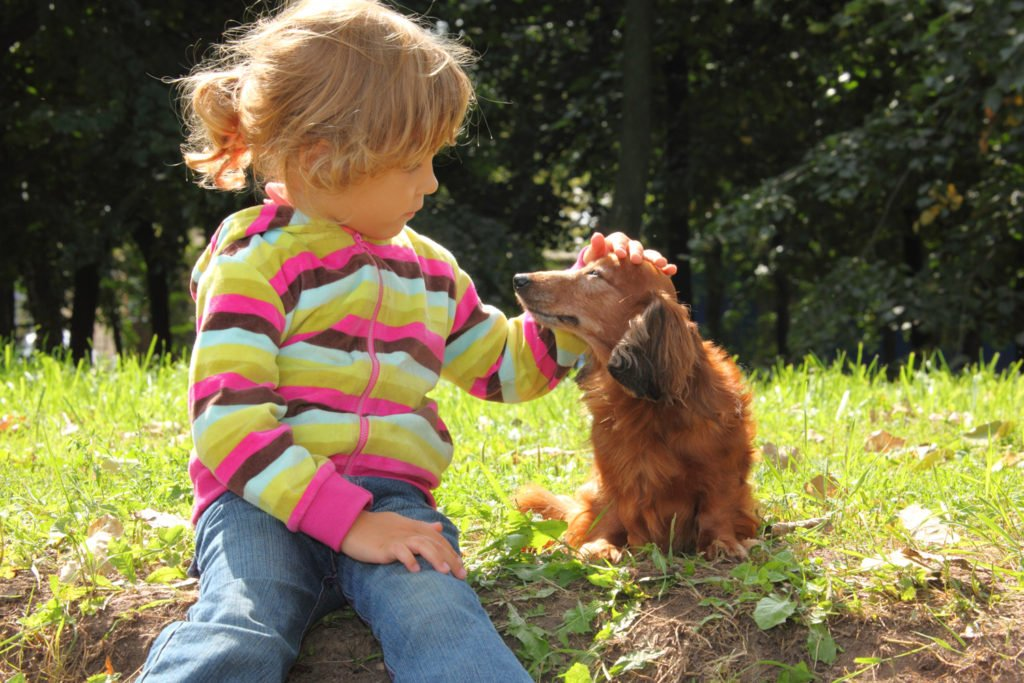 Are Dachshunds Good Family Dogs? Young child stroking a dachshund's head