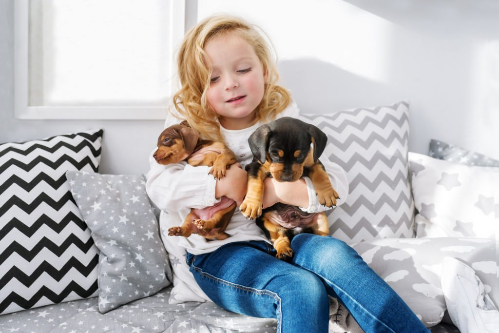 Are Dachshunds Good Family Dogs? Young child hugging and squeezing a dachshund