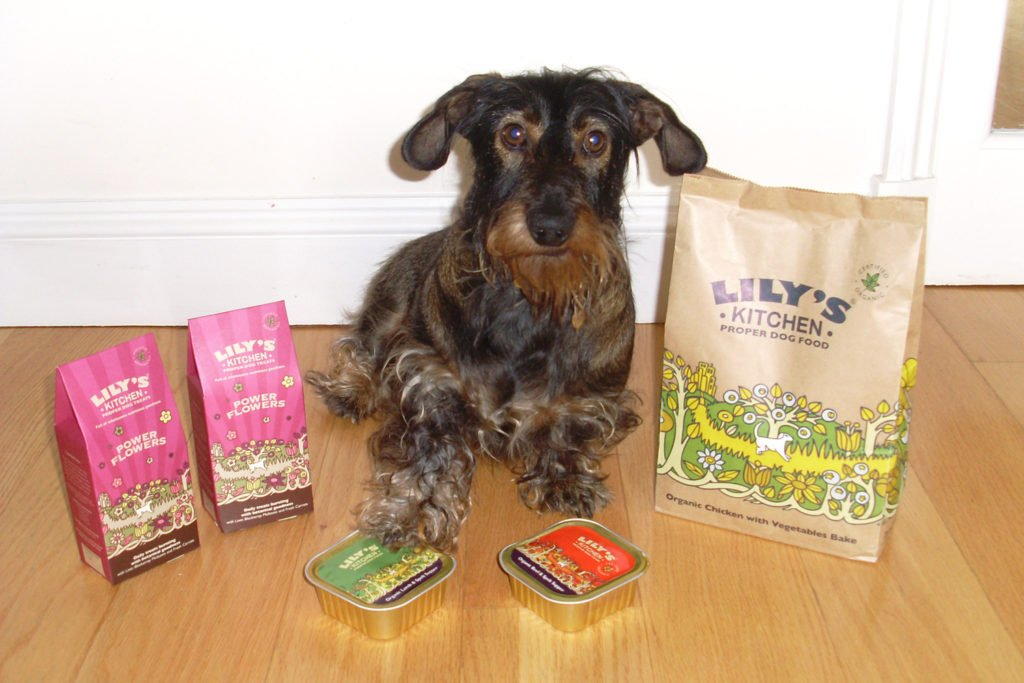 What Do Dachshunds Eat? A miniature wire-haired dachshund sat on the floor next to Lily's Kitchen food
