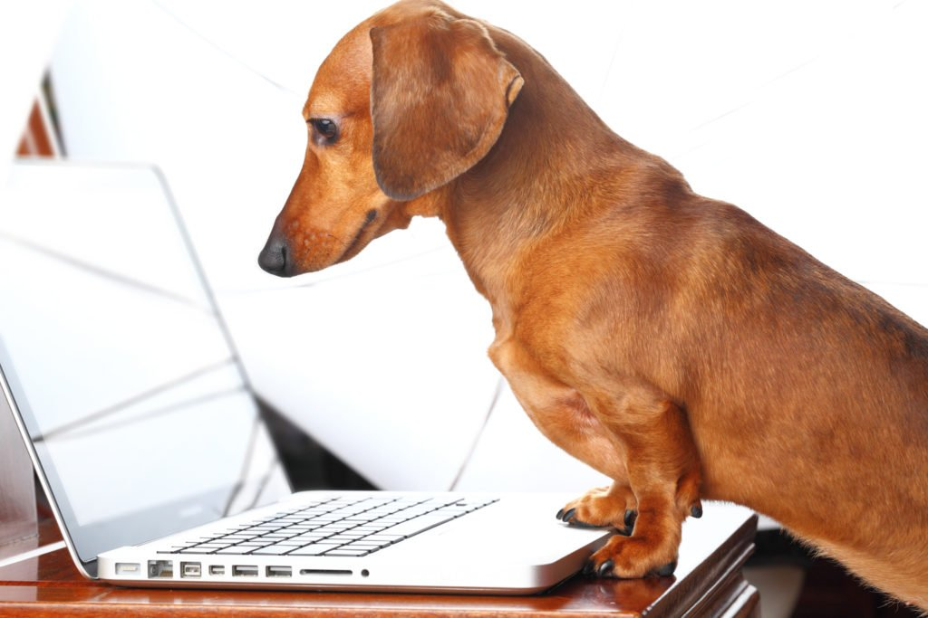 Dachshund reading content and affiliate policy on a laptop