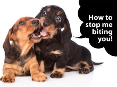 how to stop a dachshund puppy biting