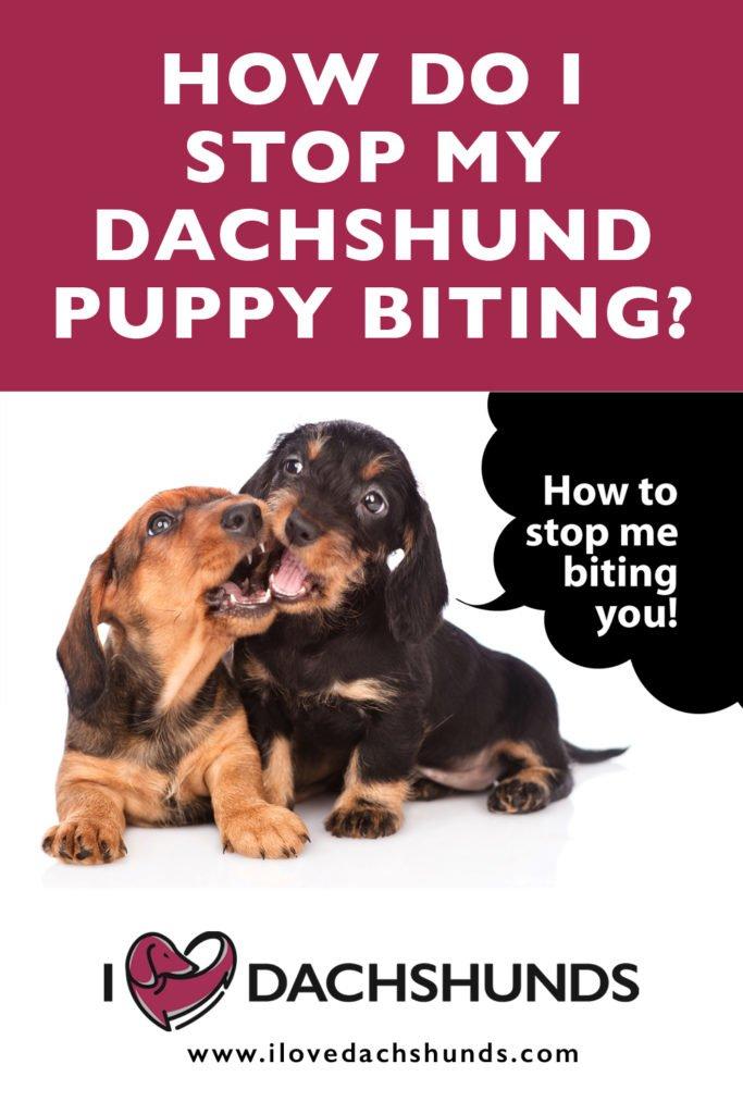 How do I stop my dachshund puppy biting