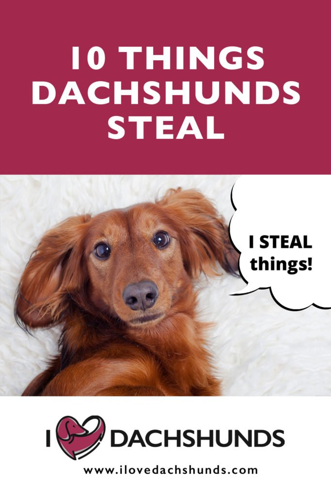 10 things dachshunds steal