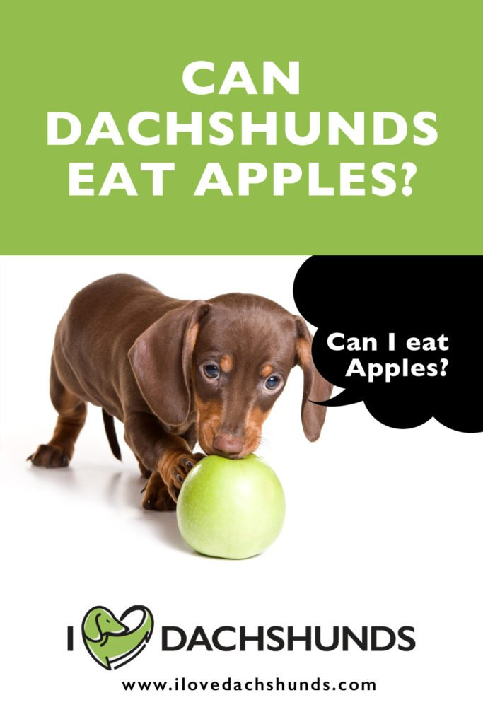 Can Dachshunds Eat Apples