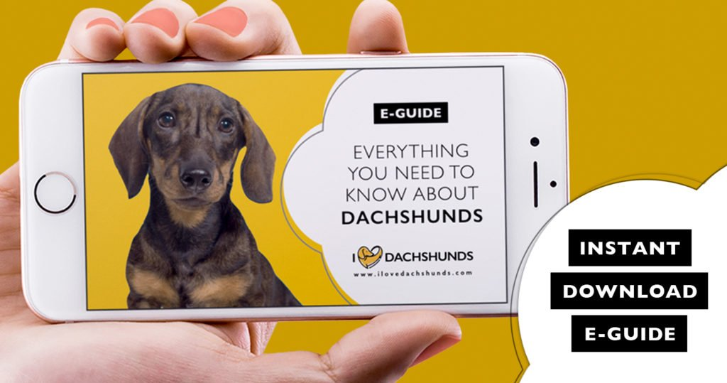 Everything You Need To Know About Dachshunds E-Guide Digital PDF Instant Download