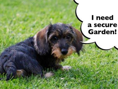 Dachshund proofing your garden