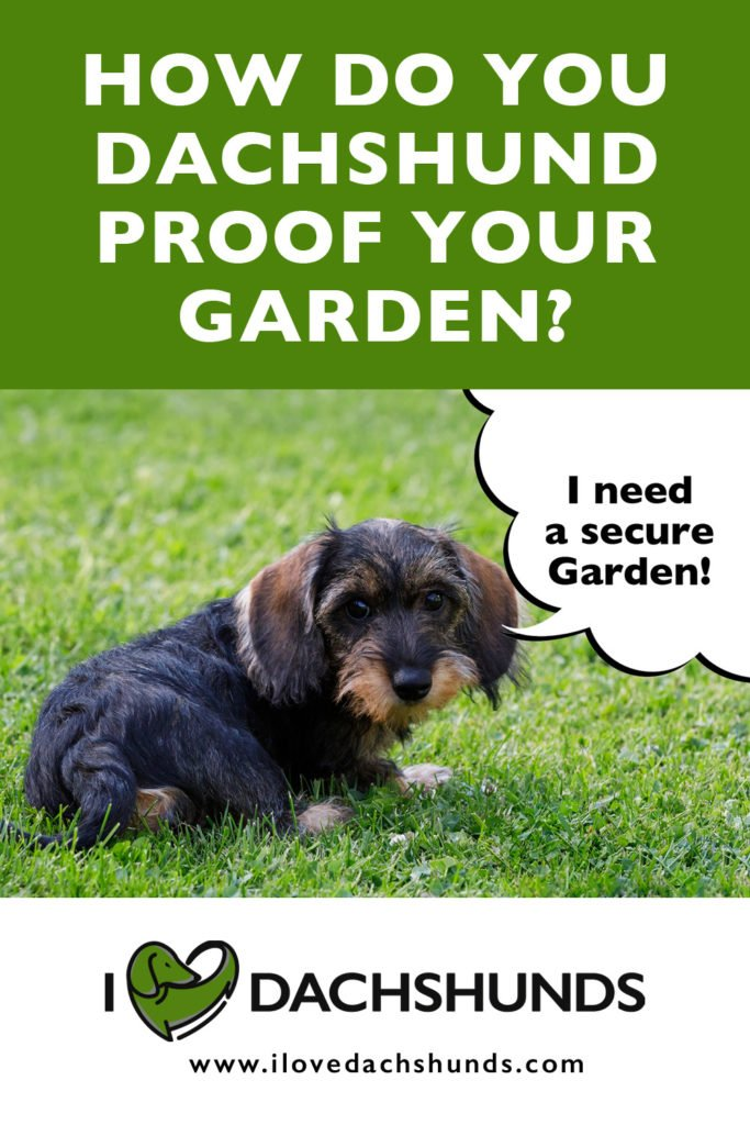 how to dachshund proof your garden or yard