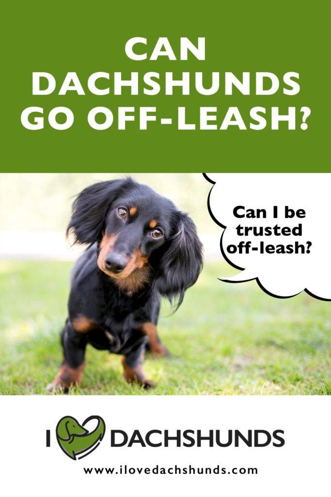 Can Dachshunds go off leash?