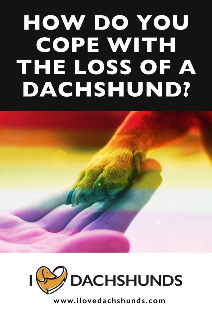 How to cope with the loss of a Dachshund