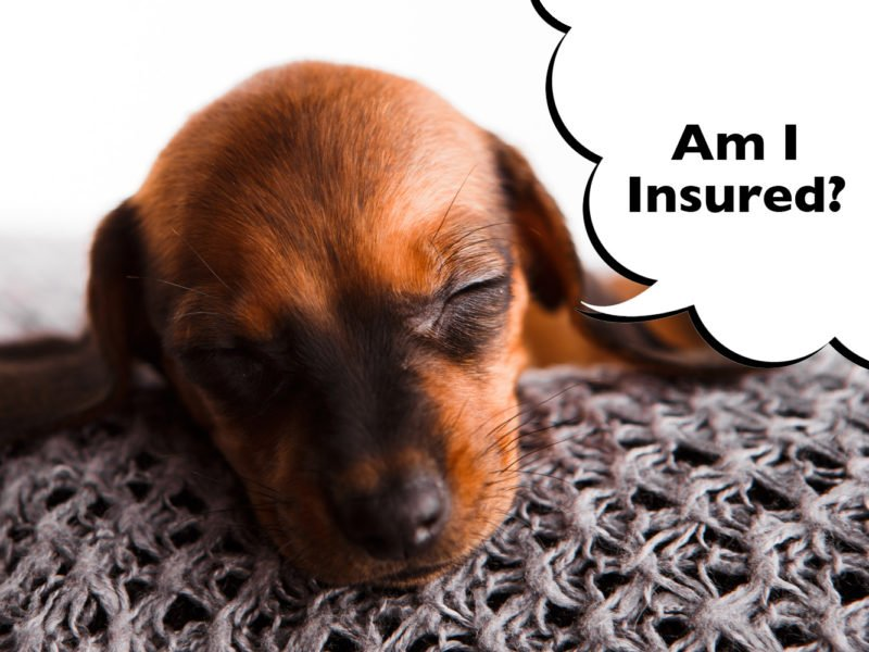 dachshund pet insurance