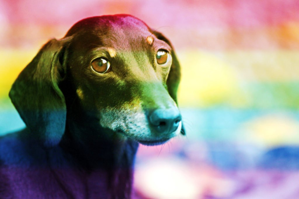 A Dachshund that has passed away and crossed the rainbow bridge