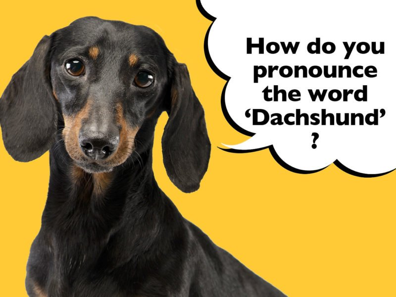 How to pronounce the word Dachshund