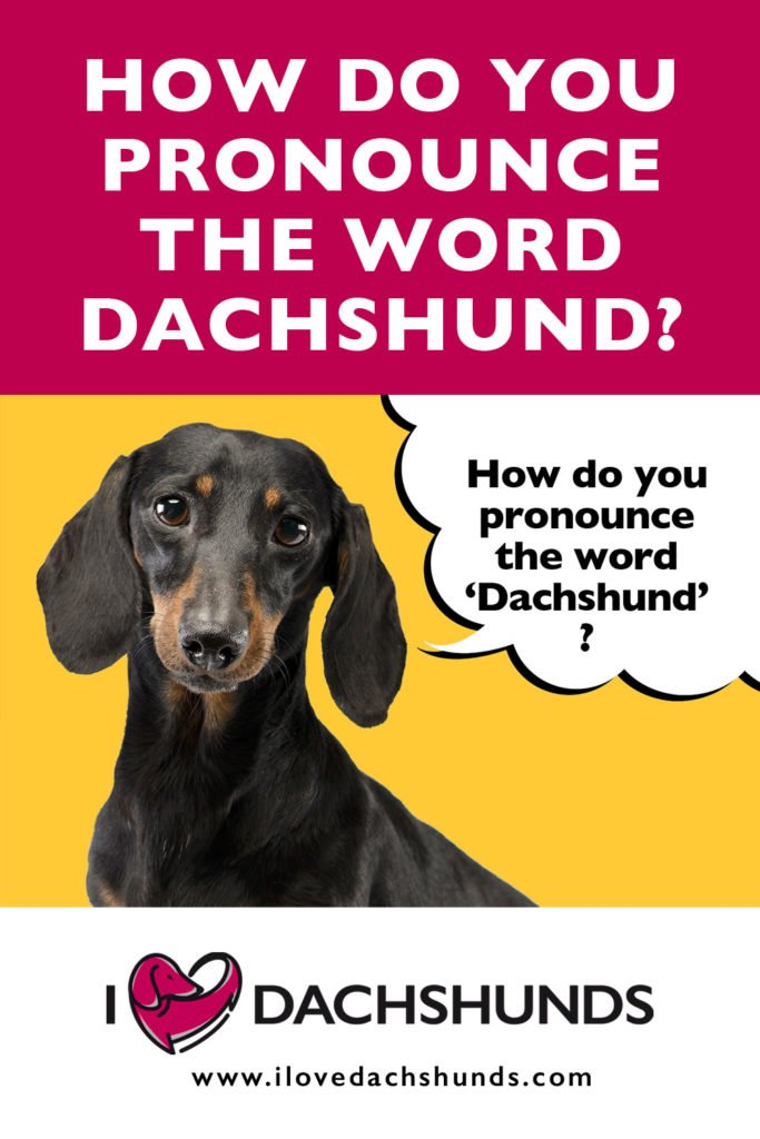 How Do You Pronounce The Word Dachshund?
