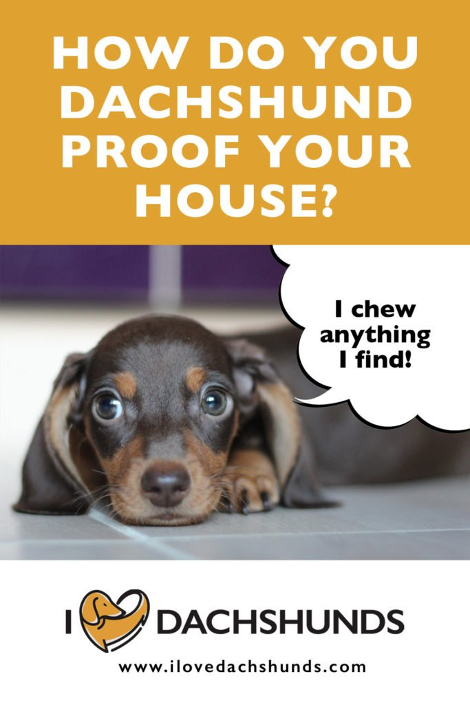 How To Dachshund Proof Your Home