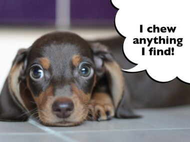 Dachshund proof your house