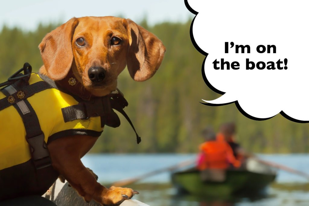 Dachshund in a life jacket on a boat