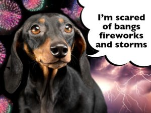 How to help a Dachshund with fireworks and thunderstorms