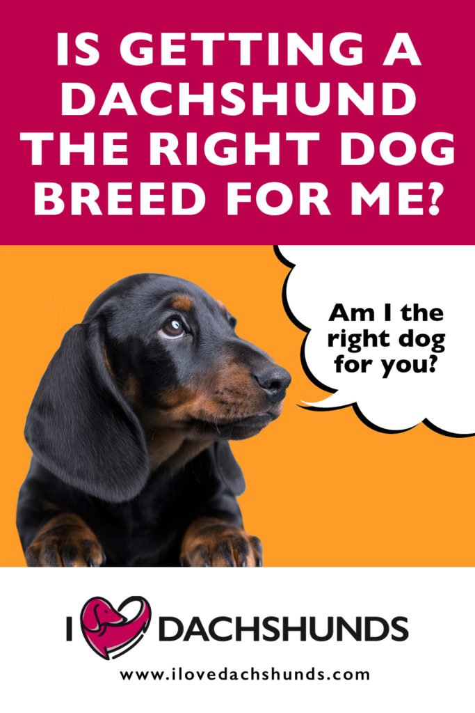 """Is getting a Dachshund the right dog for me"" text over an image of a Dachshund puppy with a speech bubble that says ""Am I the right dog for you?""."