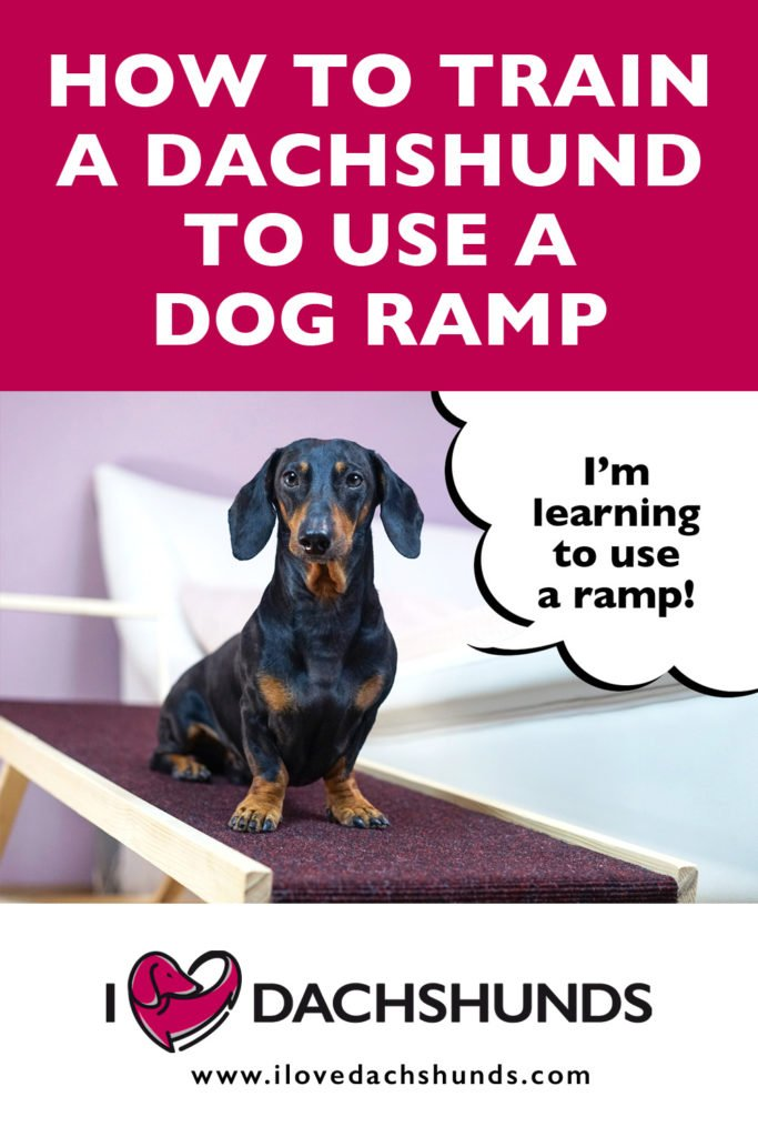 'How to train a dachshund to use a dog ramp' text with photo of a dachshund sat on a dog ramp and a speech bubble that says 'I'm learning to use a ramp'