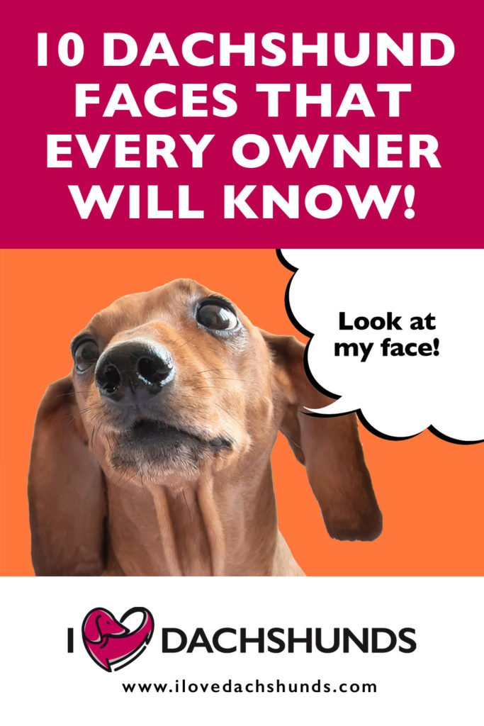 '10 Dachshund faces that every owner will know' heading with a photo of a Dachshund and a speech bubble that says 'look at my face'