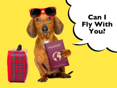 Can Dachshunds Fly On A Plane?