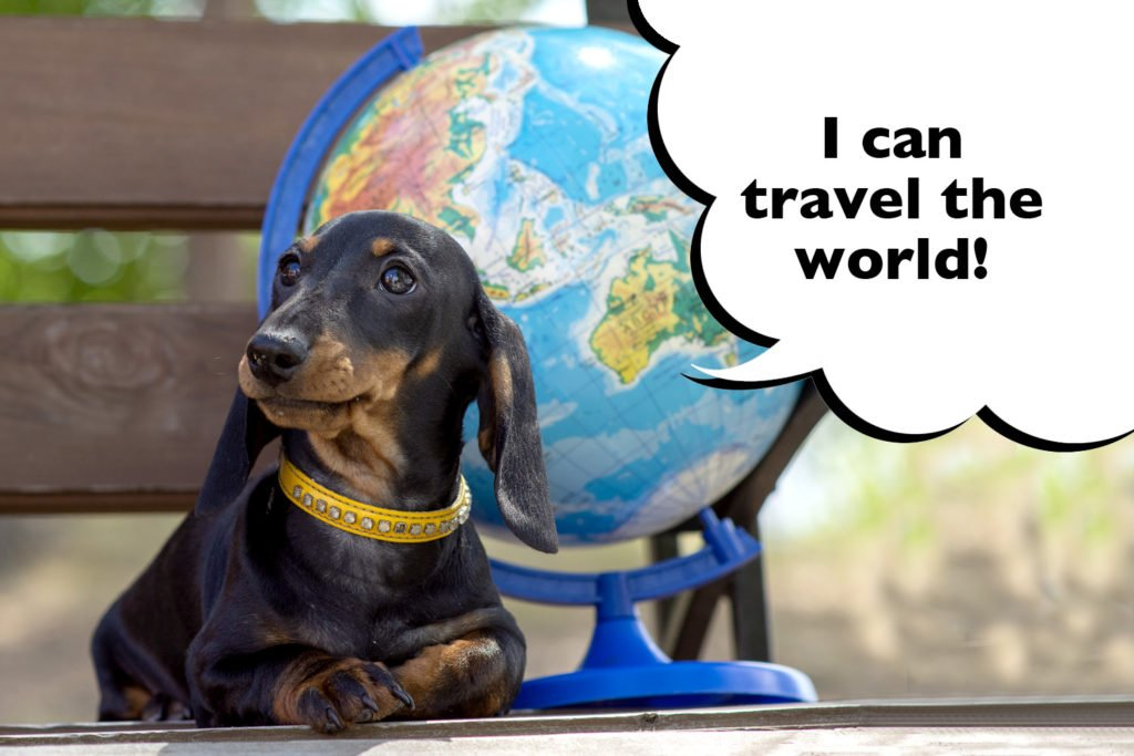 Dachshund laying next to a world globe with a speech bubble that says 'I can travel the world'