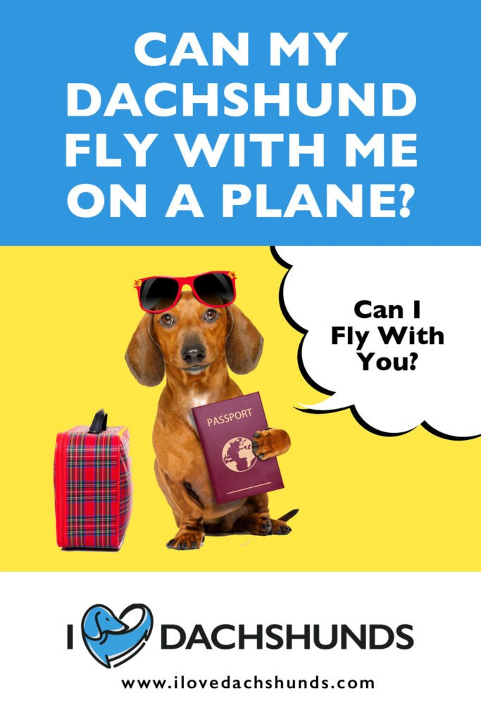 'Can Dachshunds fly on a plane' heading with a Dachshund underneath holding a passport and a speech bubble that says 'can i fly with you?'