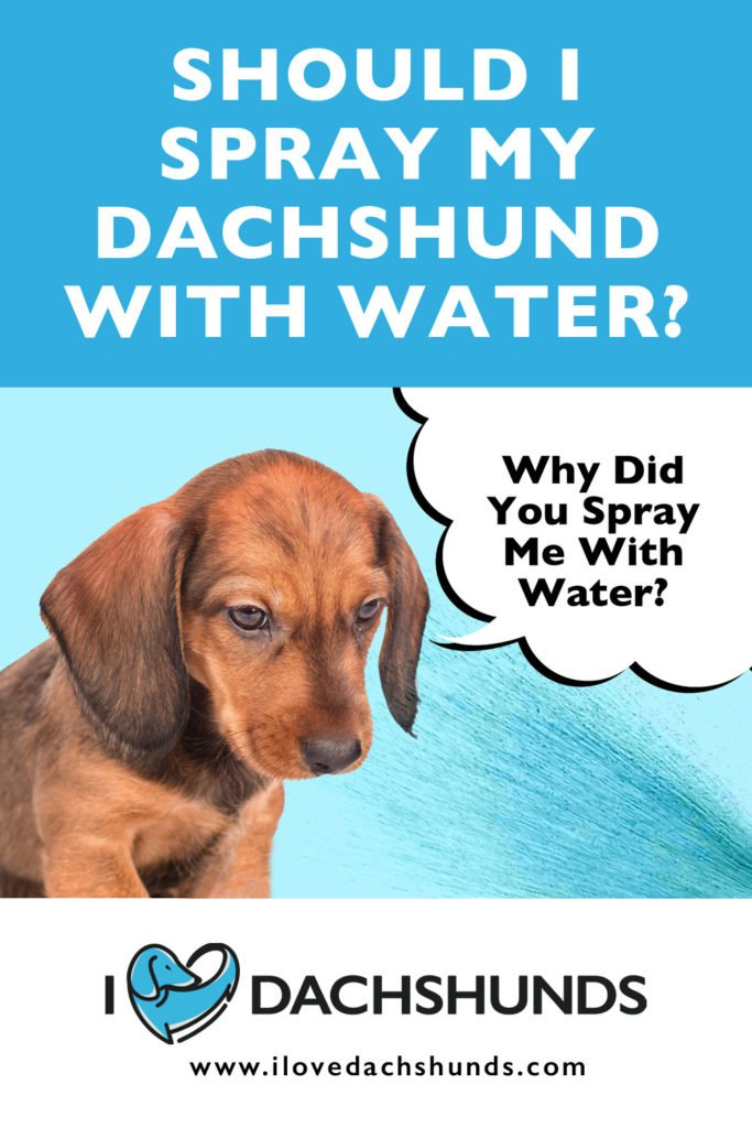 'Should I spray my Dachshund with water' heading with a picture of a Dachshund being sprayed in the face with water and a speech bubble that says 'Why dd you spray me with water?'
