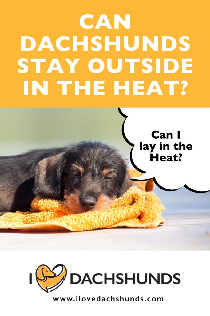 'Can Dachshunds stay outside in the heat' heading with a photo of a Dachshund laying in the sunshine and a speech bubble that says 'can I lay in the heat?'