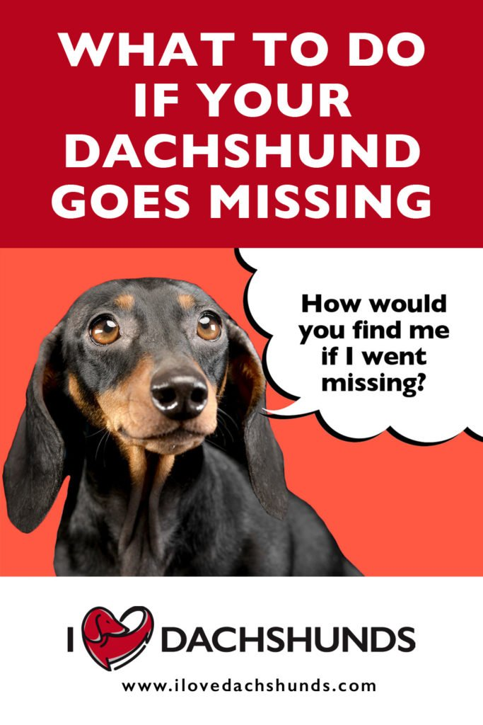 'What to do if your Dachshund goes missing' heading with a Dachshund on a red background with a speech bubble that says 'how would you find me if I went missing?'